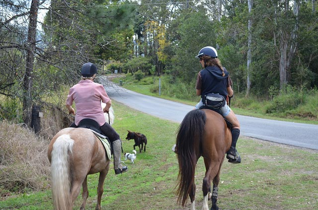 Riding a horse may seem like an innocent exercise, but an alcohol test on a woman who allegedly rode her horse to a bottle shop has produced a surprising result.
